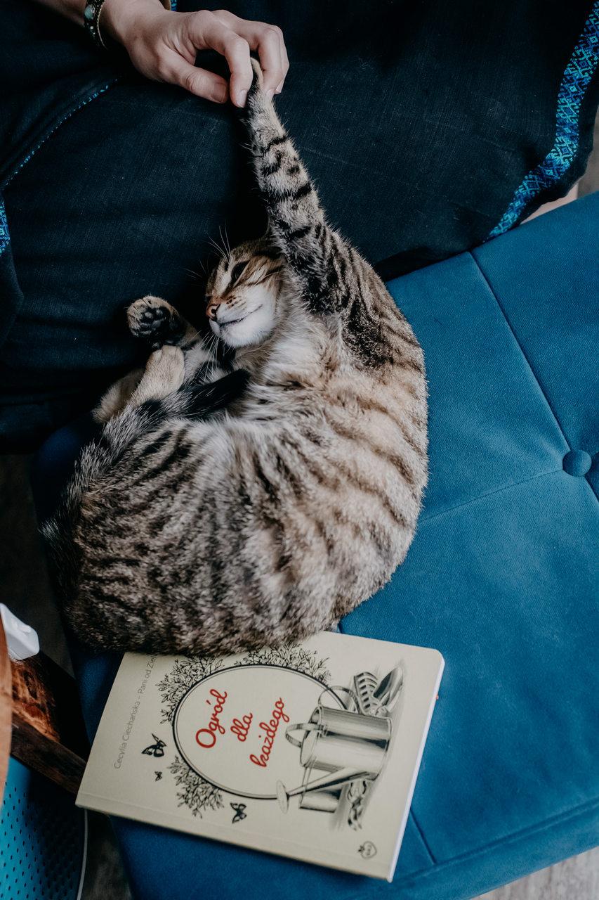 Kotek na pufie a pod nim książka