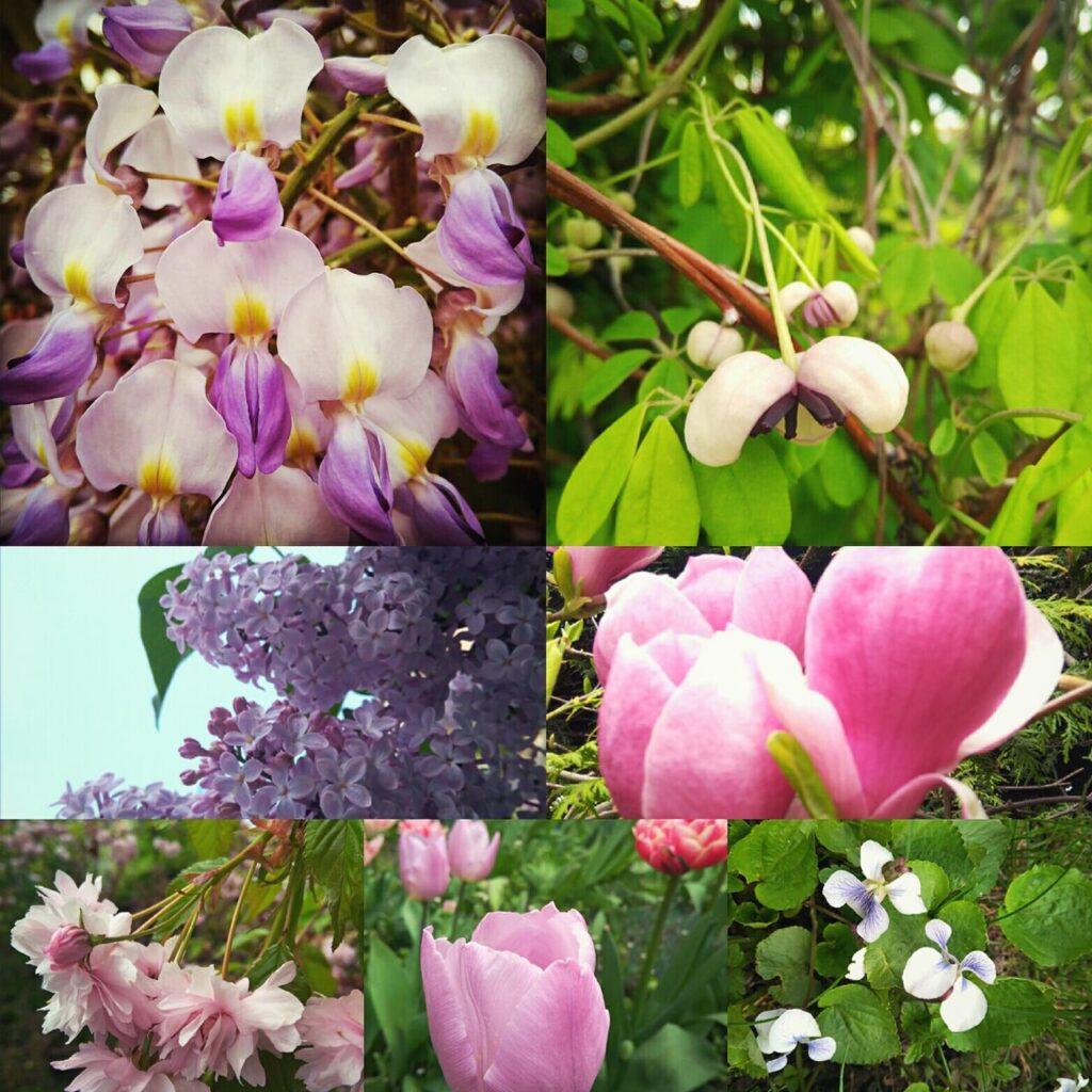ogród różowo fioletowy