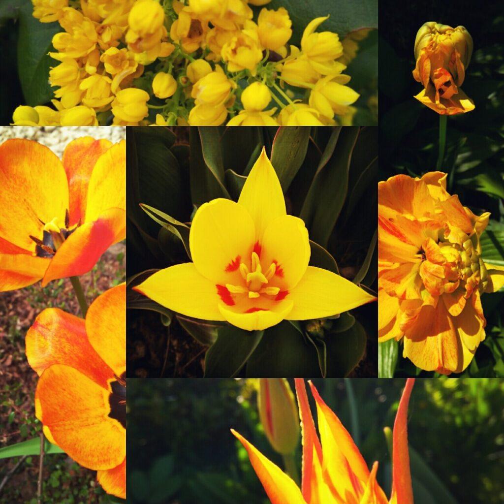 Ogród w kolorze żółtym