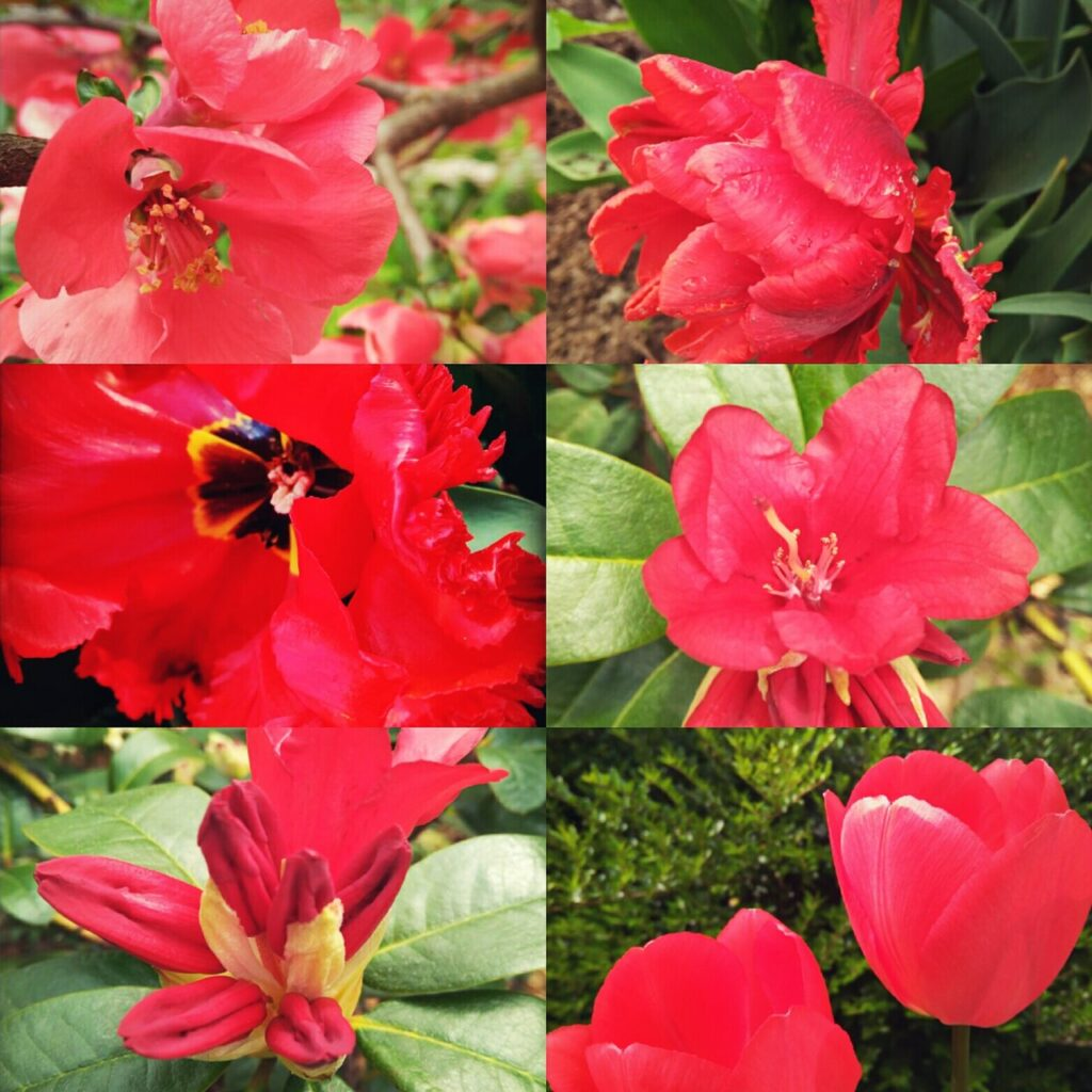 ogród w kolorze czerwonym